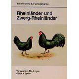 Rheinländer und Zwerg-Rheinländer - Bild 1