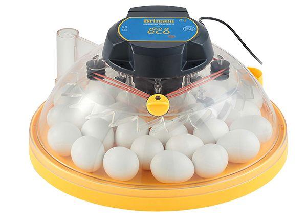Maxi II Eco - Incubator