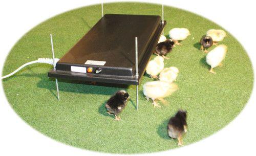 Küken-Wärmeplatte mit Thermostat - (30 x 60 cm) - Bild 1