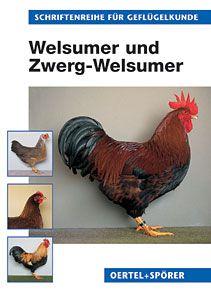 Welsumer und Zwerg-Welsumer - Bild 1