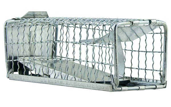 Trap for rats (35 x 10 x 10 cm)