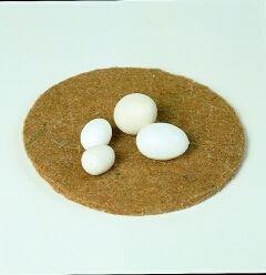 Eier - Sittiche - Kunststoff - Bild 1